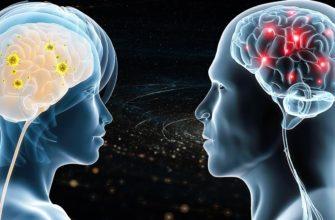 Различиях между мужским и женским мозгом